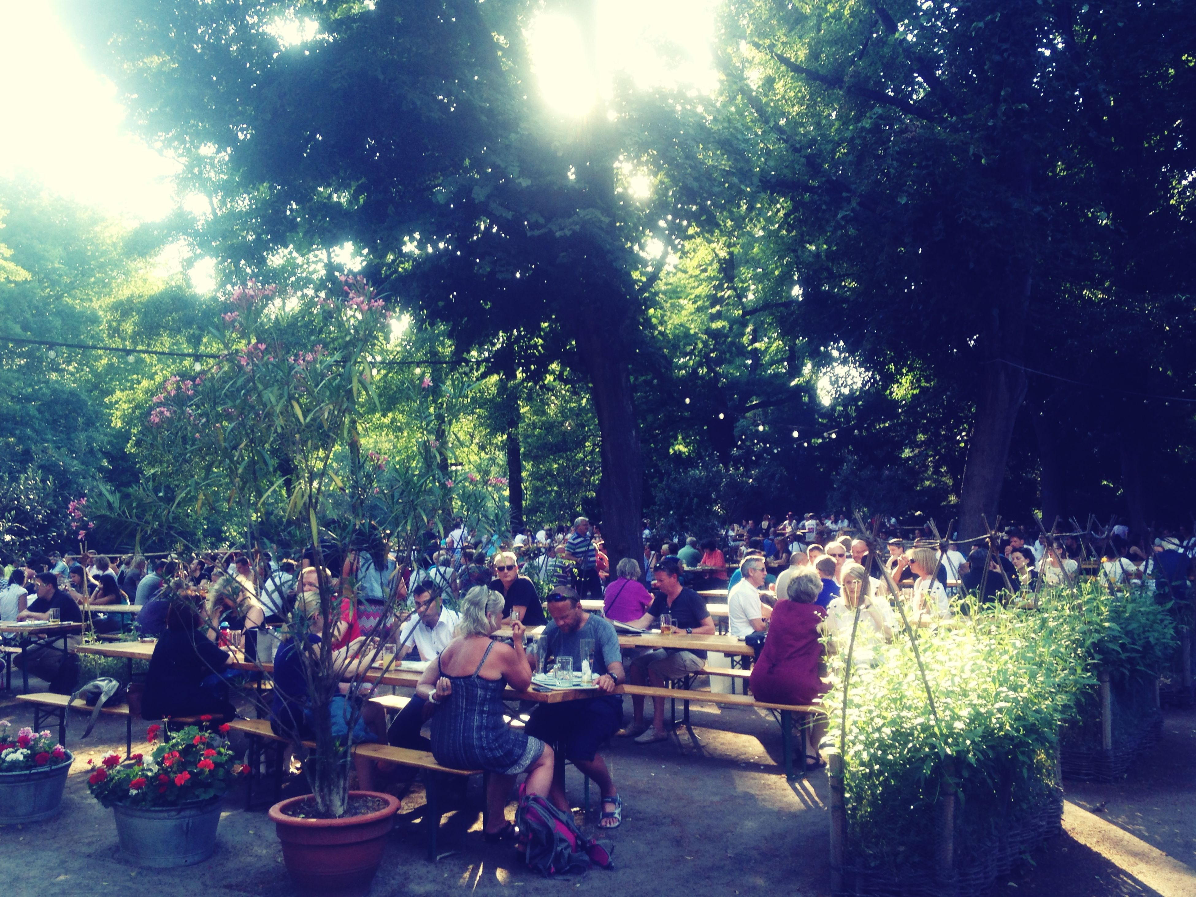 tree, men, person, growth, lifestyles, green color, sunlight, leisure activity, potted plant, freshness, chair, plant, park - man made space, day, large group of people, outdoors, nature, food and drink, table