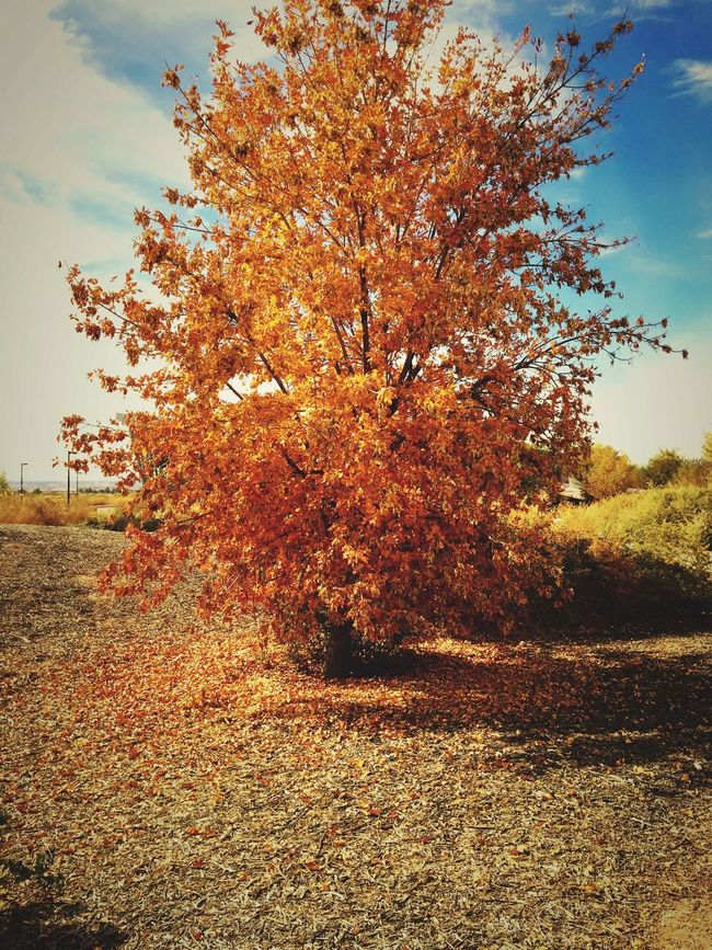 Fall Fall Beauty Colors Scenery Colorful EyeEm Best Shots Las Vegas Clouds