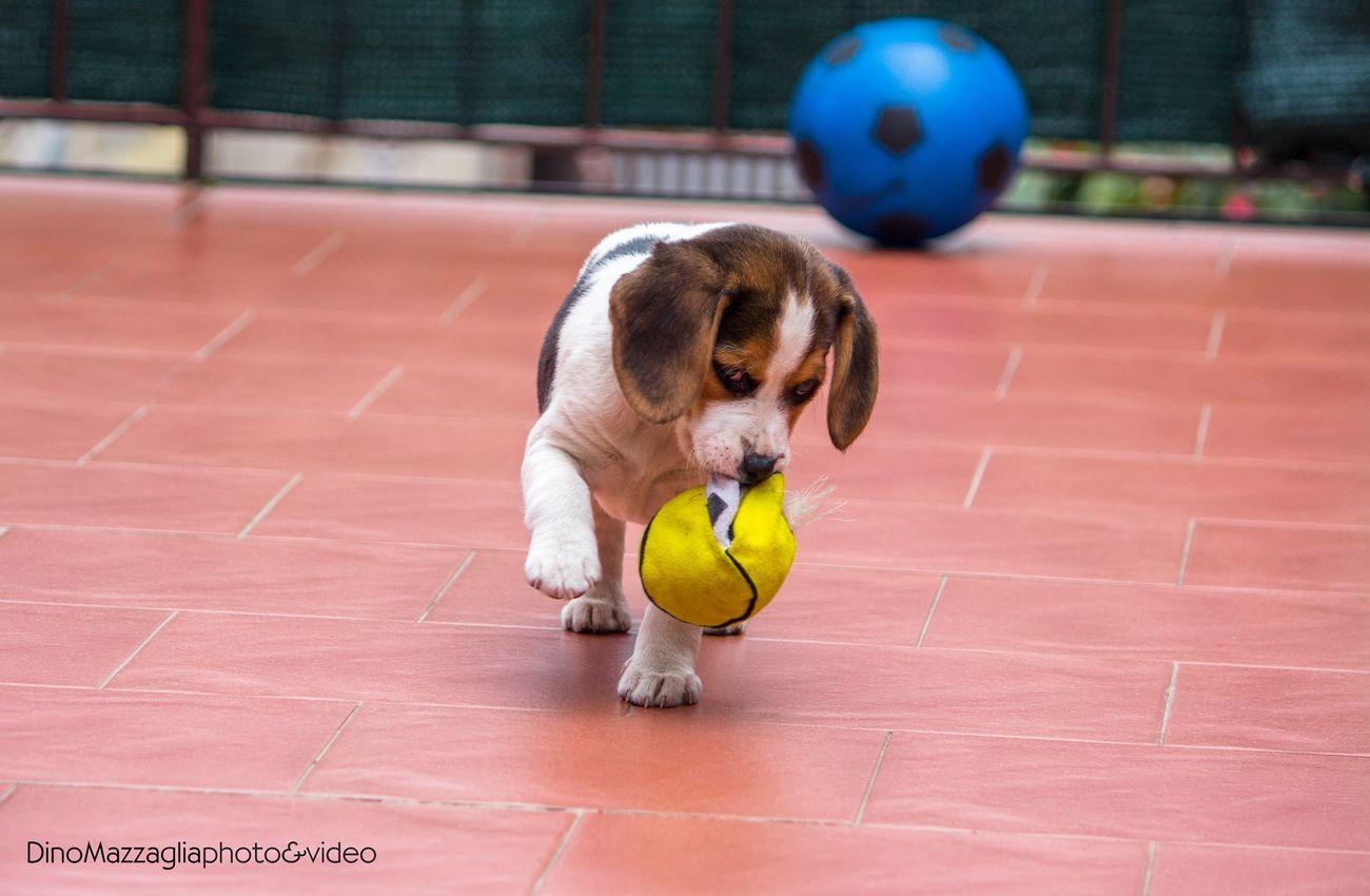 Taking Photos Hello World Animals Puppy I Love My Dog Dog Beautiful Happy Taking Photos Lovely