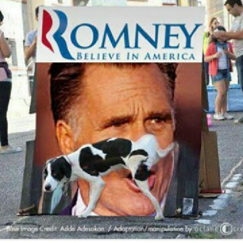 haha even the dog knows TeamObama Dog Fuckromney Romney should'vebeenswallowed mypresidentisblack repost