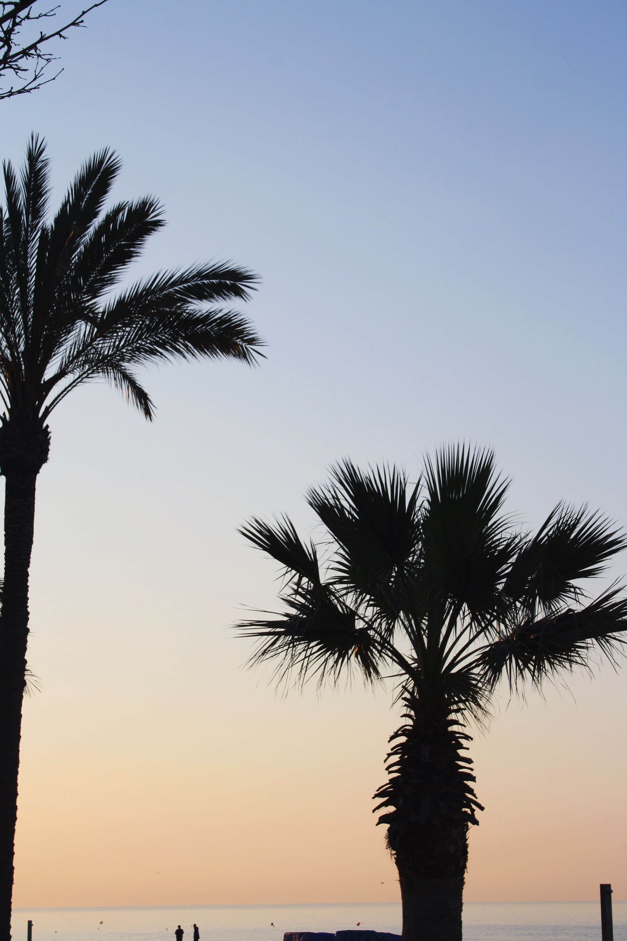 palm tree, tree, beauty in nature, clear sky, silhouette, scenics, nature, sunset, sky, tranquility, tree trunk, sea, tranquil scene, beach, palm frond, growth, horizon over water, outdoors, no people, water, day