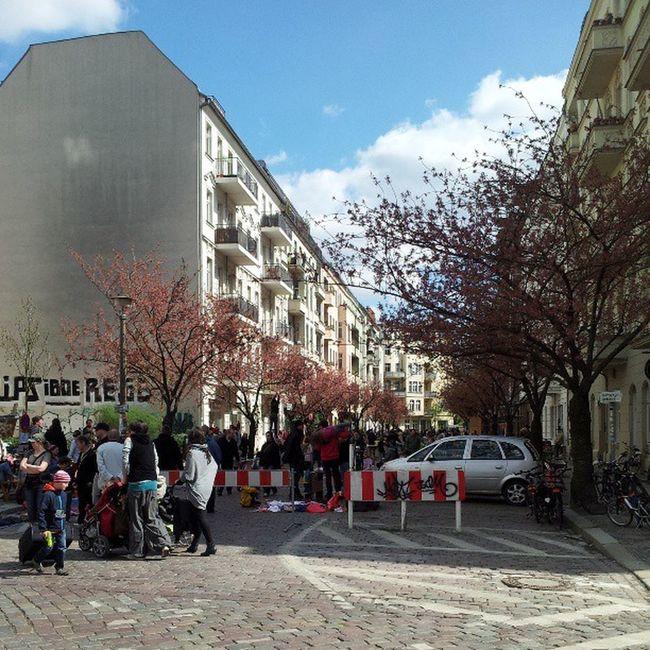 Cherryblossom Kirschbl ütenfest B ötzowkiez Berlin nofilter