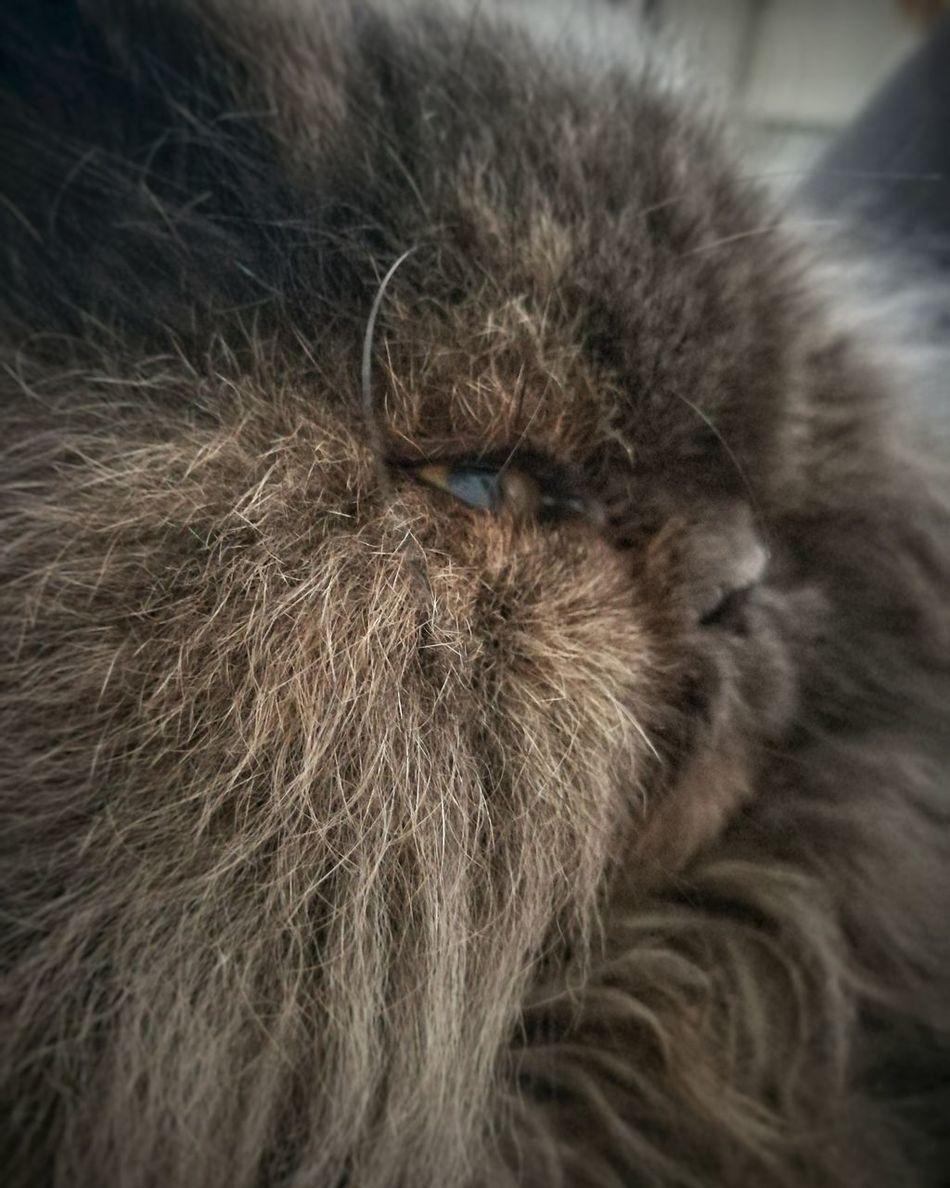 Domestic Animals Cat Feline Pets No People Close-up Furryfriend One Animal Animal Hair Domestic Cat First Eyeem Photo EyeEmNewHere