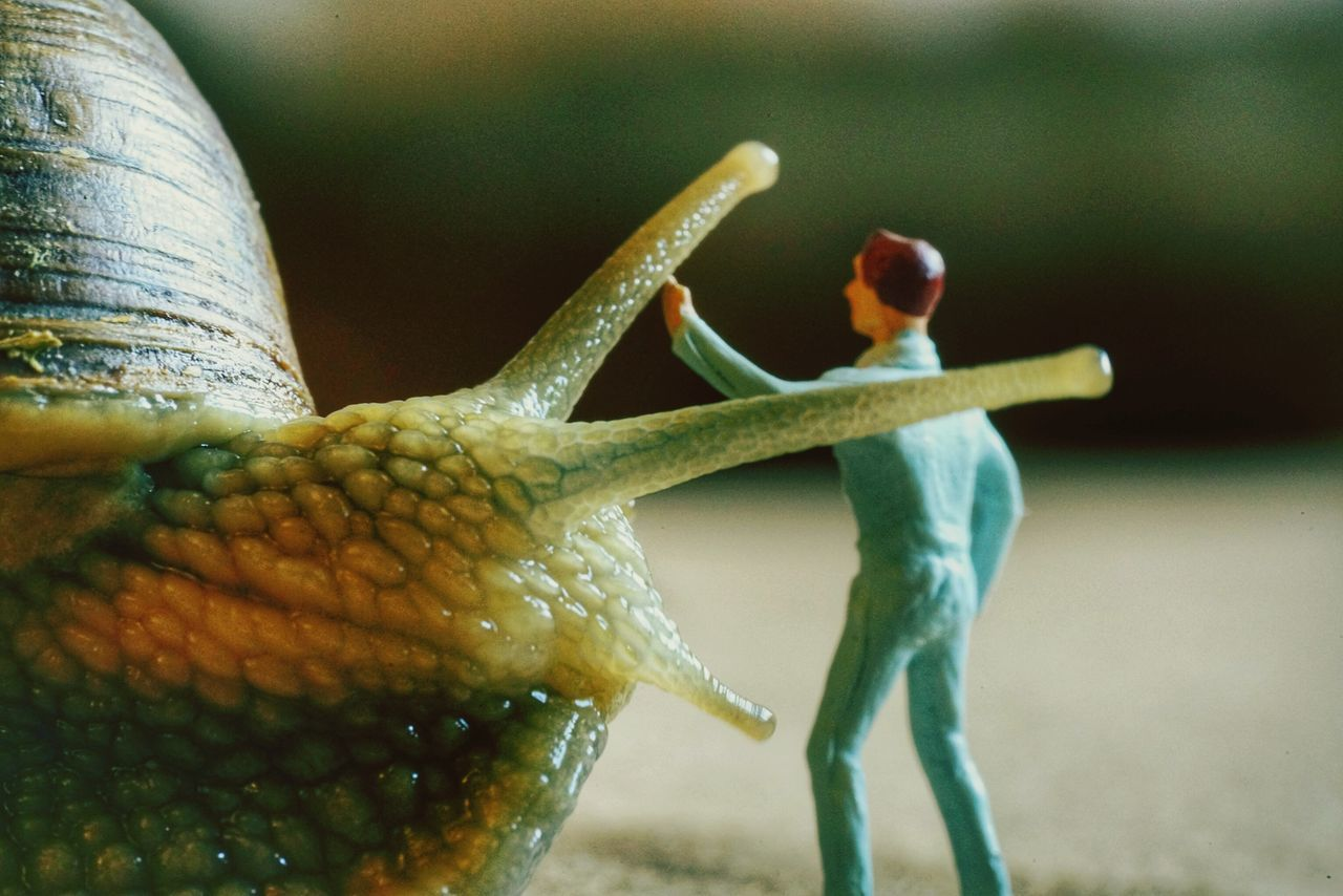 stay quite ! i'll save you... promise ! Snail🐌 Sony α♡Love Sony A7rm2 Sony A7RII Luca Riva Macro_collection Macro Beauty Macroporn Macro Insects Macrophotography Fe9028macro Macro Photography Close-up Day