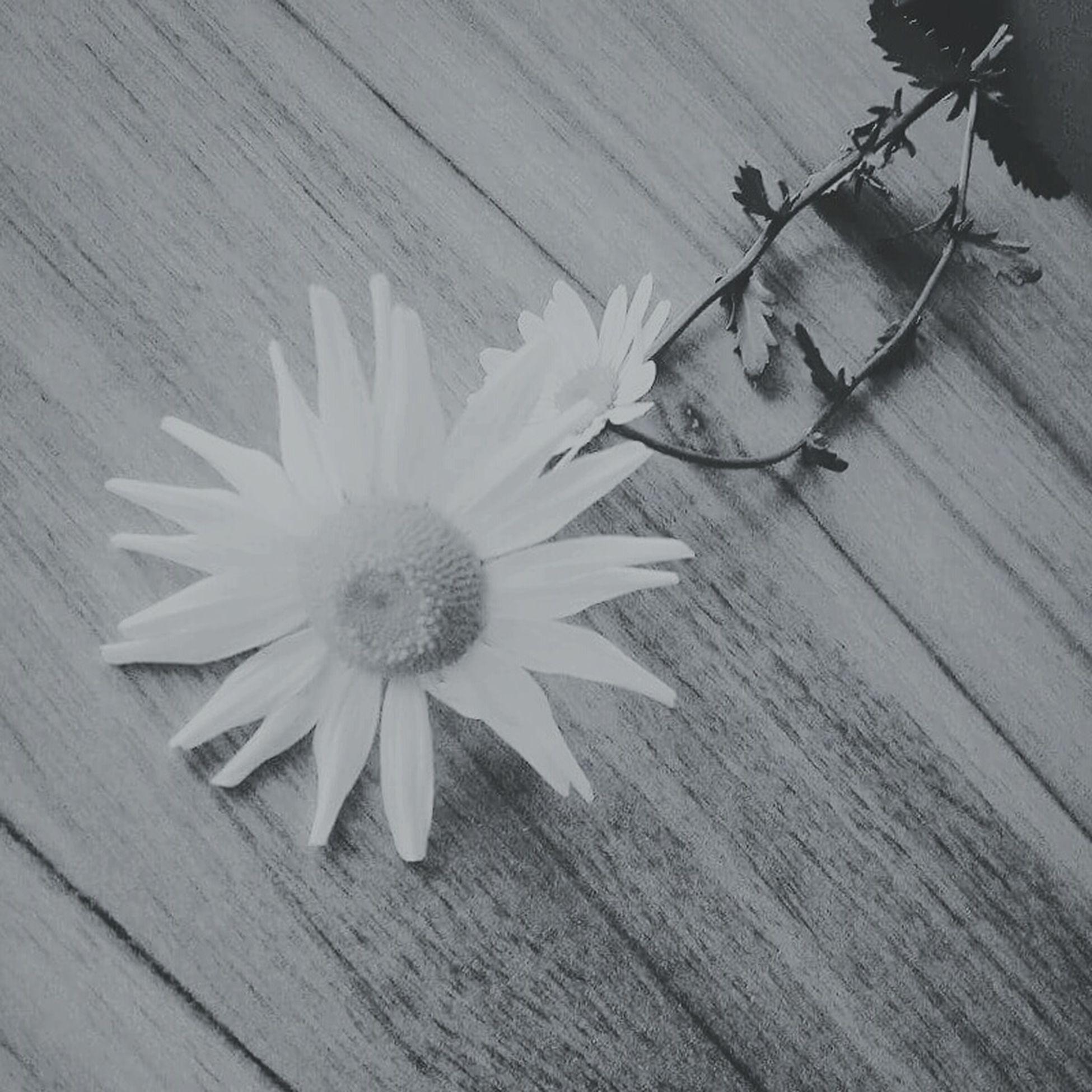Seszynprofeszyn Flowers, Nature And Beauty Instagood Instalike Instaphoto Photooftheday First Eyeem Photo
