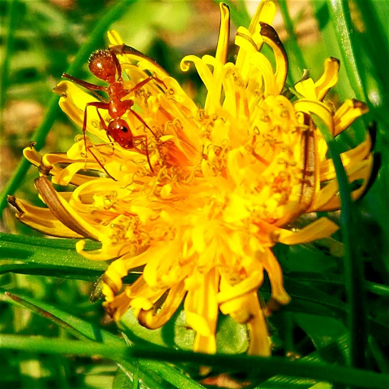 flower, animal themes, petal, animals in the wild, one animal, insect, fragility, nature, growth, flower head, plant, freshness, yellow, beauty in nature, close-up, no people, wildlife, outdoors, day, animal wildlife, bee, pollination