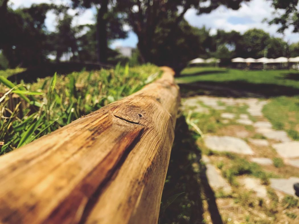 Wood - Material Outdoors Day No People Focus On Foreground Nature Log Close-up Beauty In Nature Colors Colorful Green The Great Outdoors - 2017 EyeEm Awards