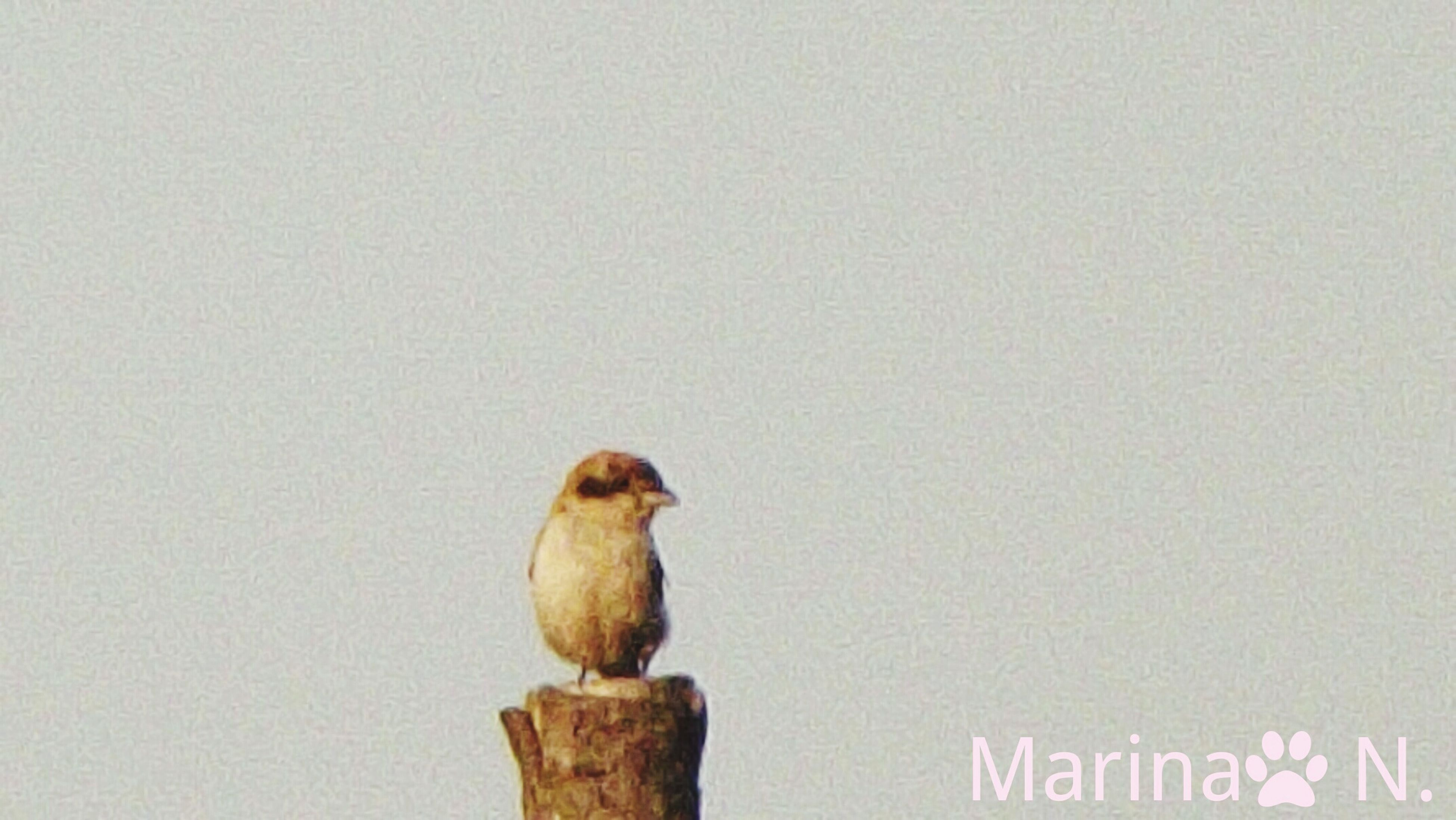 animal themes, bird, wildlife, perching, nature, perched, outdoors, day, no people, focus on foreground, wooden post, close-up, avian, beauty in nature