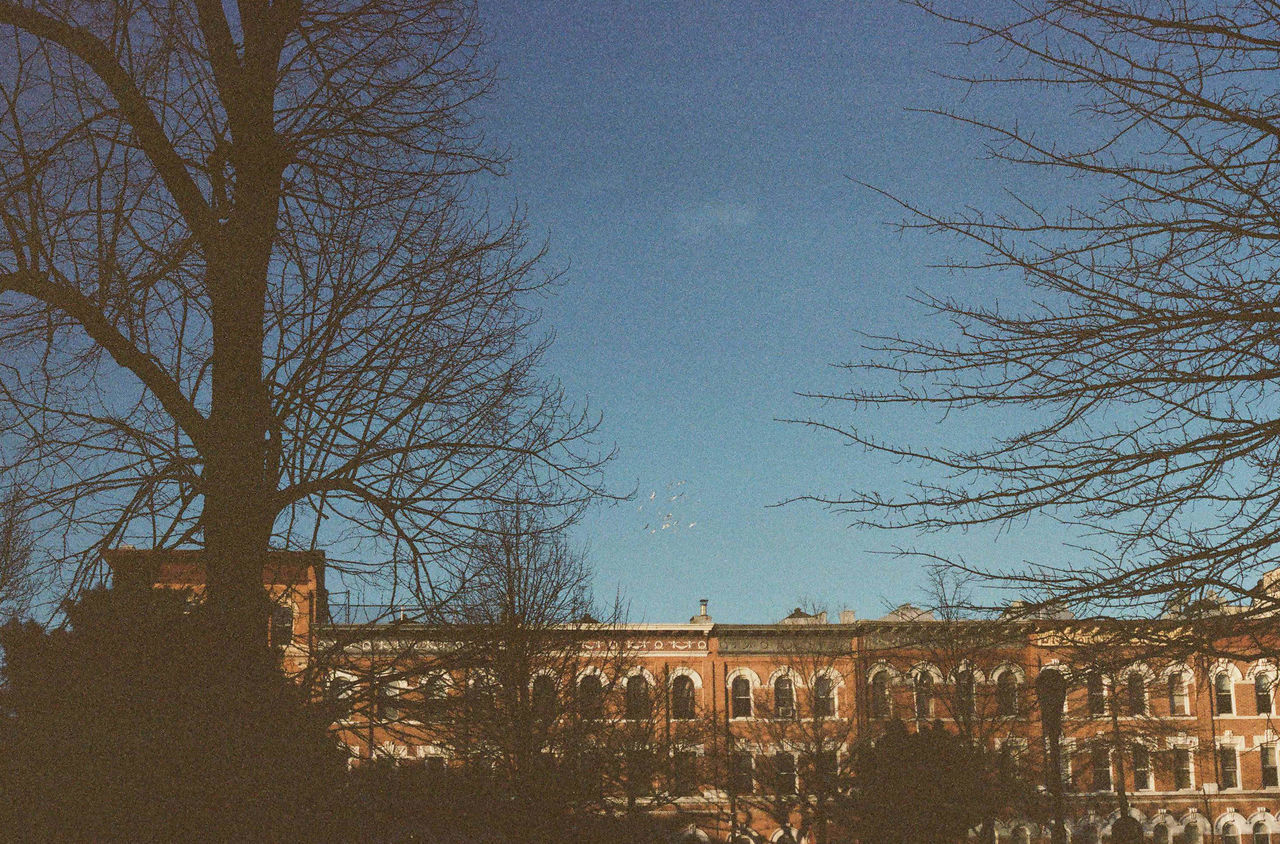 35mm film experiments 35mm Apartments Architecture Bare Tree Blue Brownstone Building Exterior Built Structure City City City Living Clear Sky Day Film Film Camera Grain Nature New York No People Old School Outdoors Sky Tree Winter