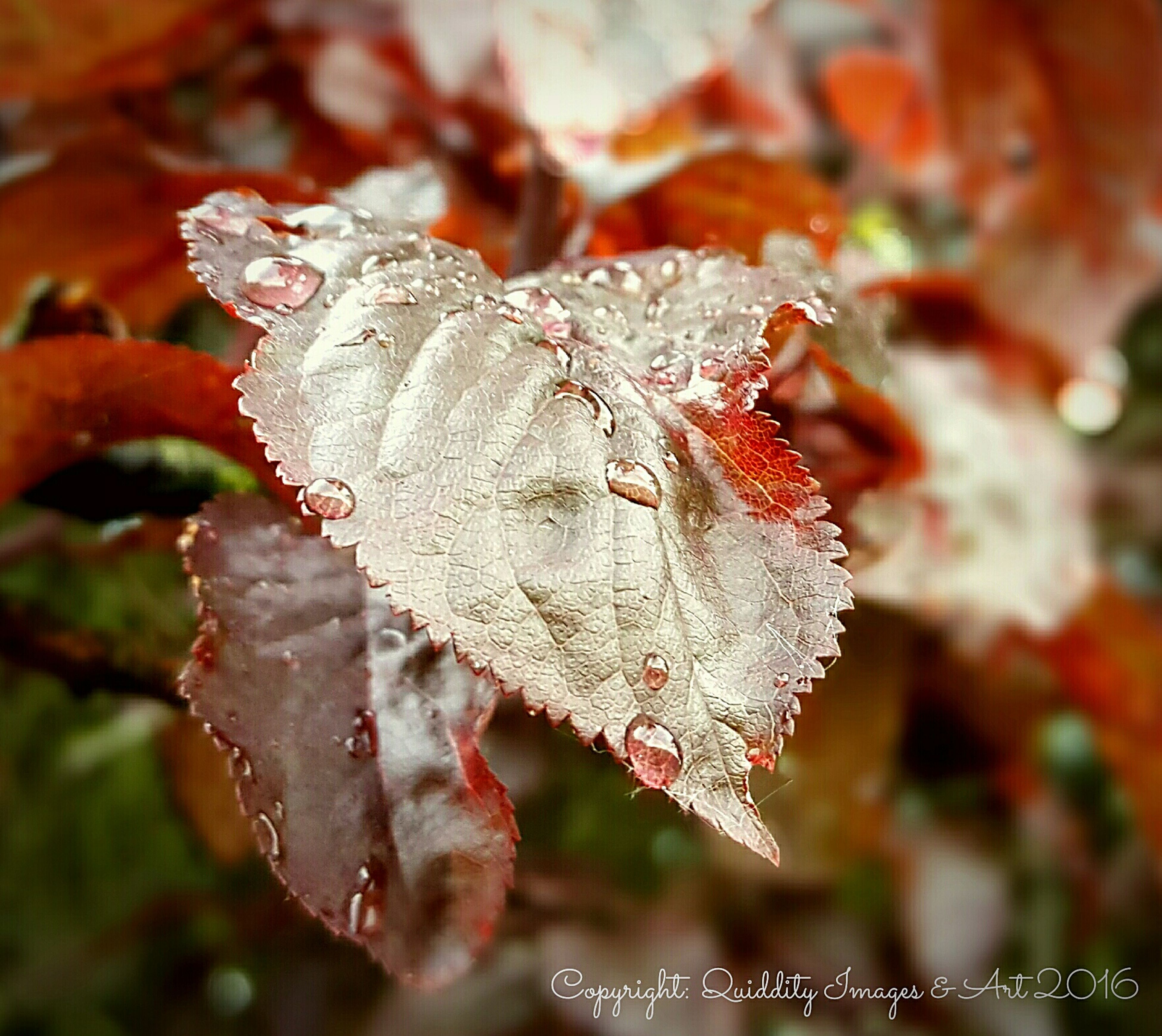 close-up, focus on foreground, leaf, season, nature, winter, insect, cold temperature, red, beauty in nature, leaf vein, fragility, selective focus, animal themes, natural pattern, day, dry, drop, snow, frozen