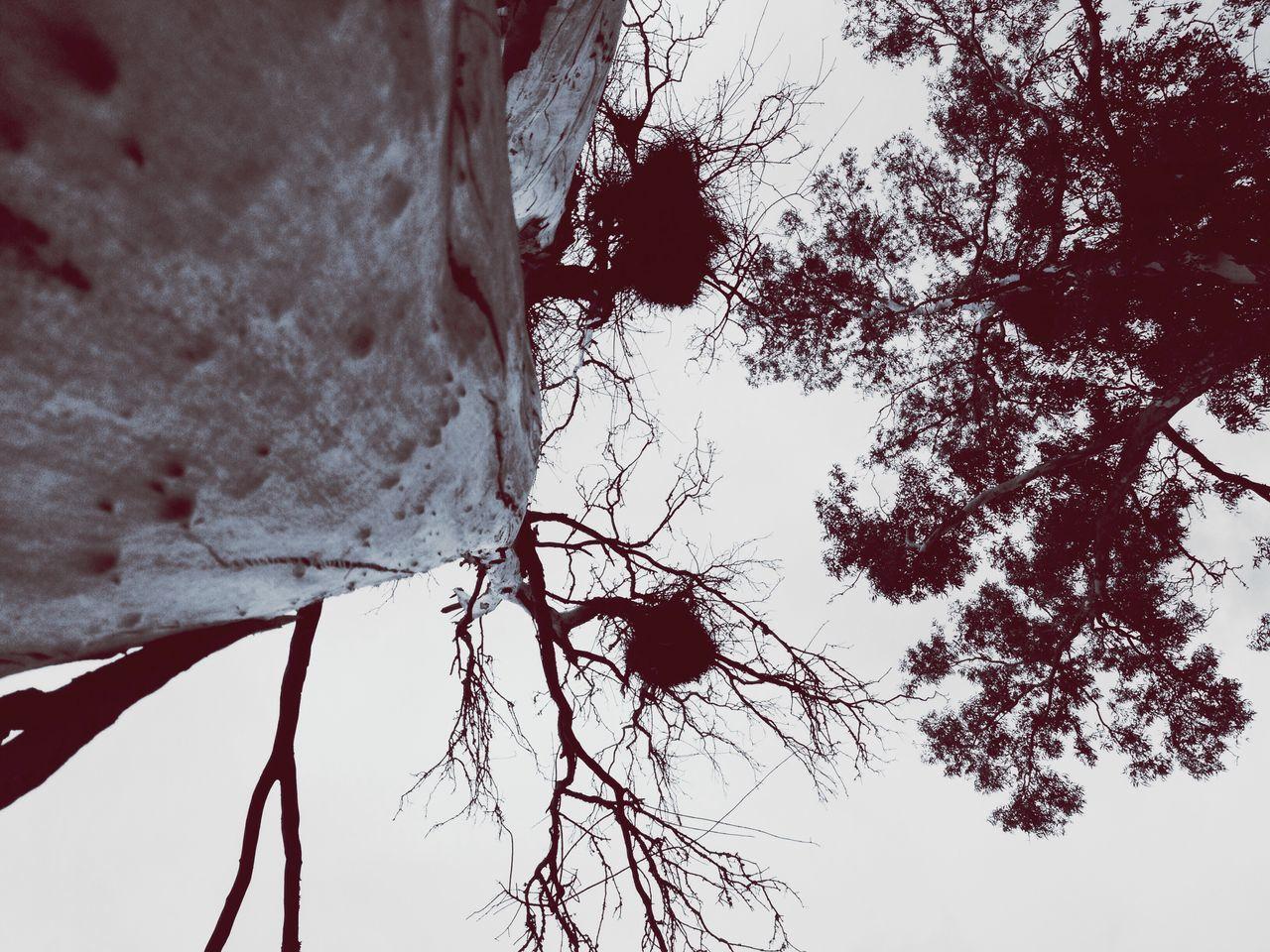 Tree Low Angle View Nature Pelotas Saturday Parque Da Baronesa