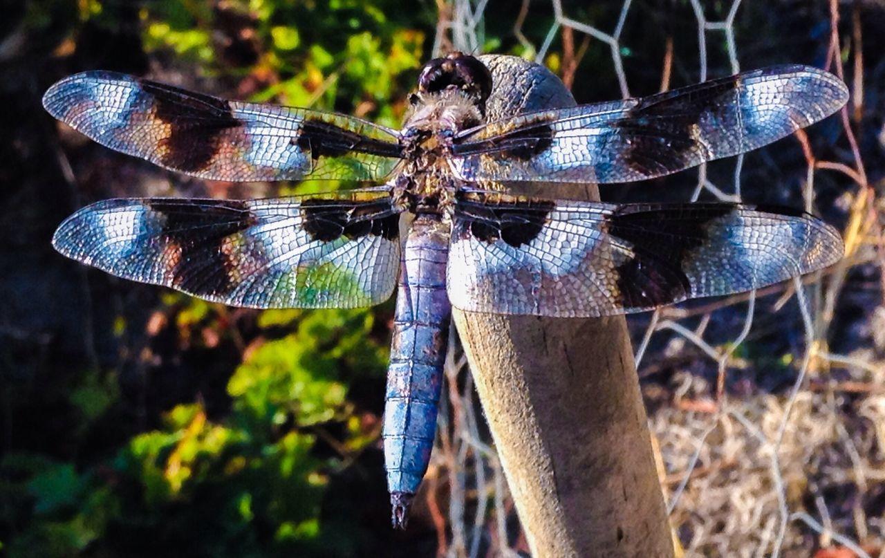 Dragonfly I Found A Dragonfly. Dragonflies My Dragonfly Photo