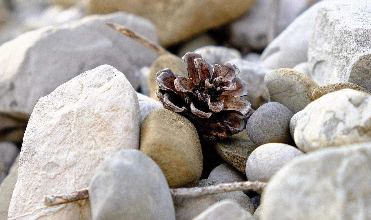 Animal Themes Close-up Nature No People Outdoors Pebble Pebble Beach Rock - Object Still Life