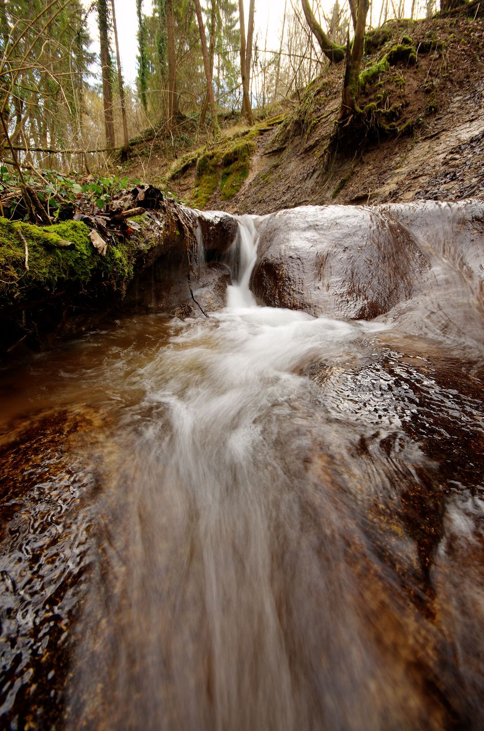 Real adventure is just a 5 minutes drive from where I live... Adventure Creek Day Forest Moss Motion Nature No People One Animal Outdoors Power In Nature Quiet Moments Relaxation Remote Seltenbach Slow Shutter Tranquility Tree Water