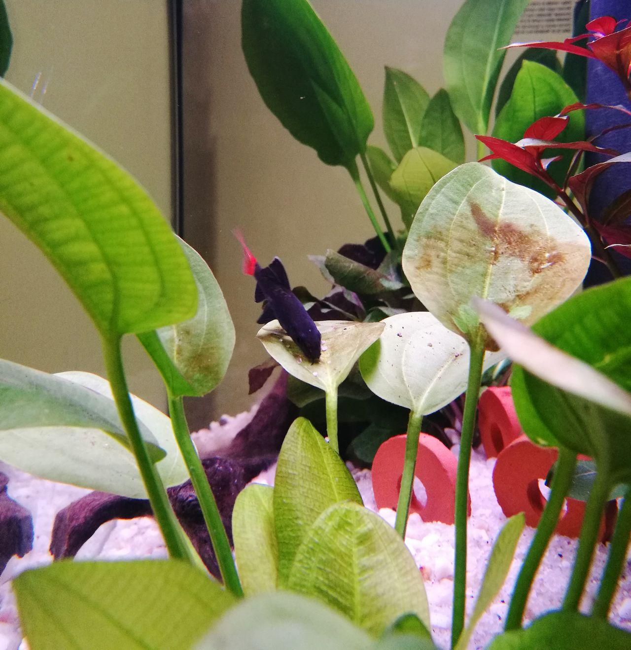 Labeo Fish Aquarium Life Aquarium Plants