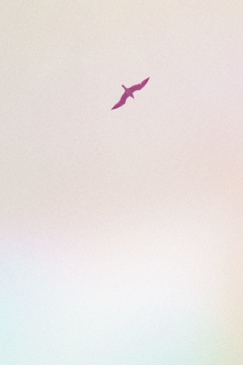 copy space, no people, flying, animal themes, animals in the wild, bird, nature, day, close-up, outdoors