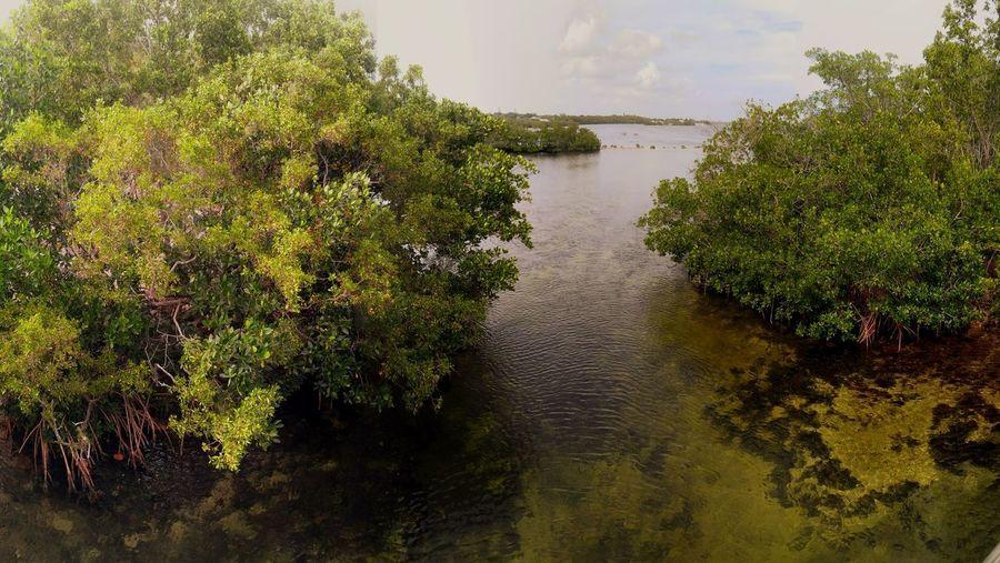 Florida Outdoors Nature Florida Keys Mangrove Everglades  Water Pennekamp John Pennekamp Coral Reef State Park