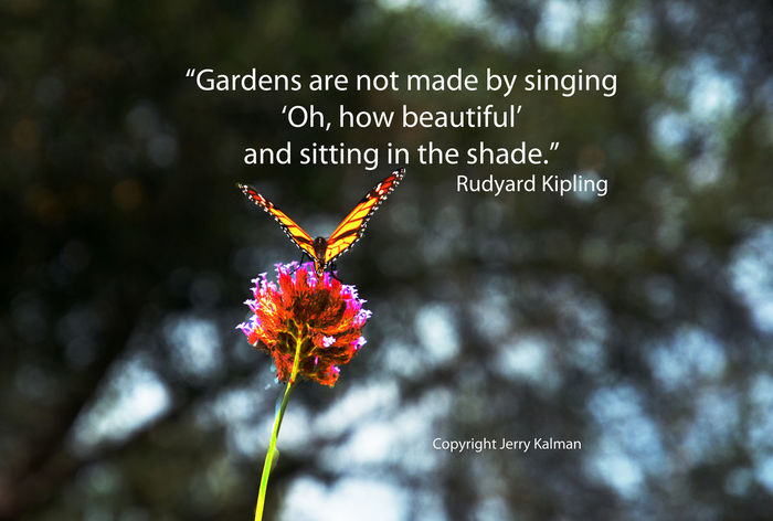 Rain (possibly today here in Fallbrook) takes some of the mystery from gardening, and this is Rudyard Kipling birthday and a quote of his with a butterfly at Myrtle Creek Gardens in Fallbrook. If this #quotograph resonates with you feel free to #repost for others to enjoy. Butterfly Butterfly - Insect Close-up Fallbrook Garden Kipling Myrtle Creek Nurs Rain
