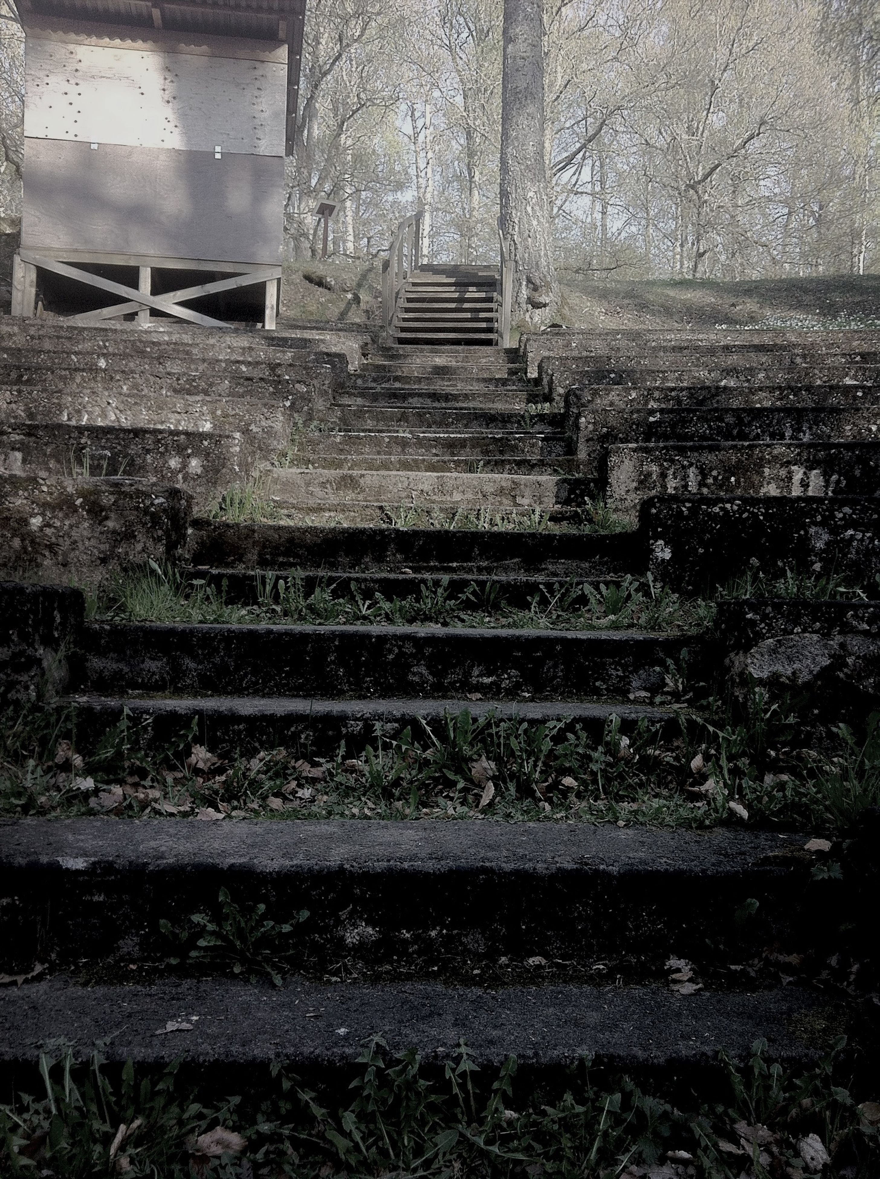 steps, steps and staircases, staircase, built structure, plant, architecture, old, abandoned, railing, day, stairs, auto post production filter, outdoors, tree, transfer print, no people, growth, sunlight, park - man made space, building exterior