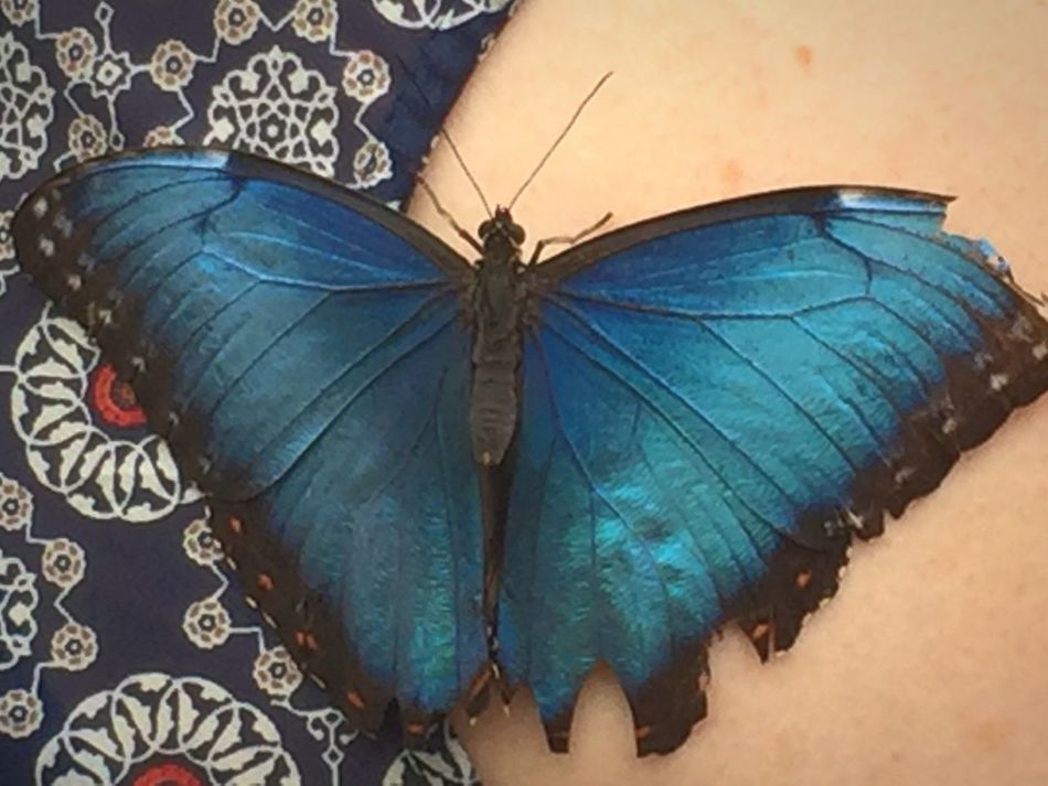 Butterfly Taking Pictures Thebutterflyplace Evolved Nature Blue