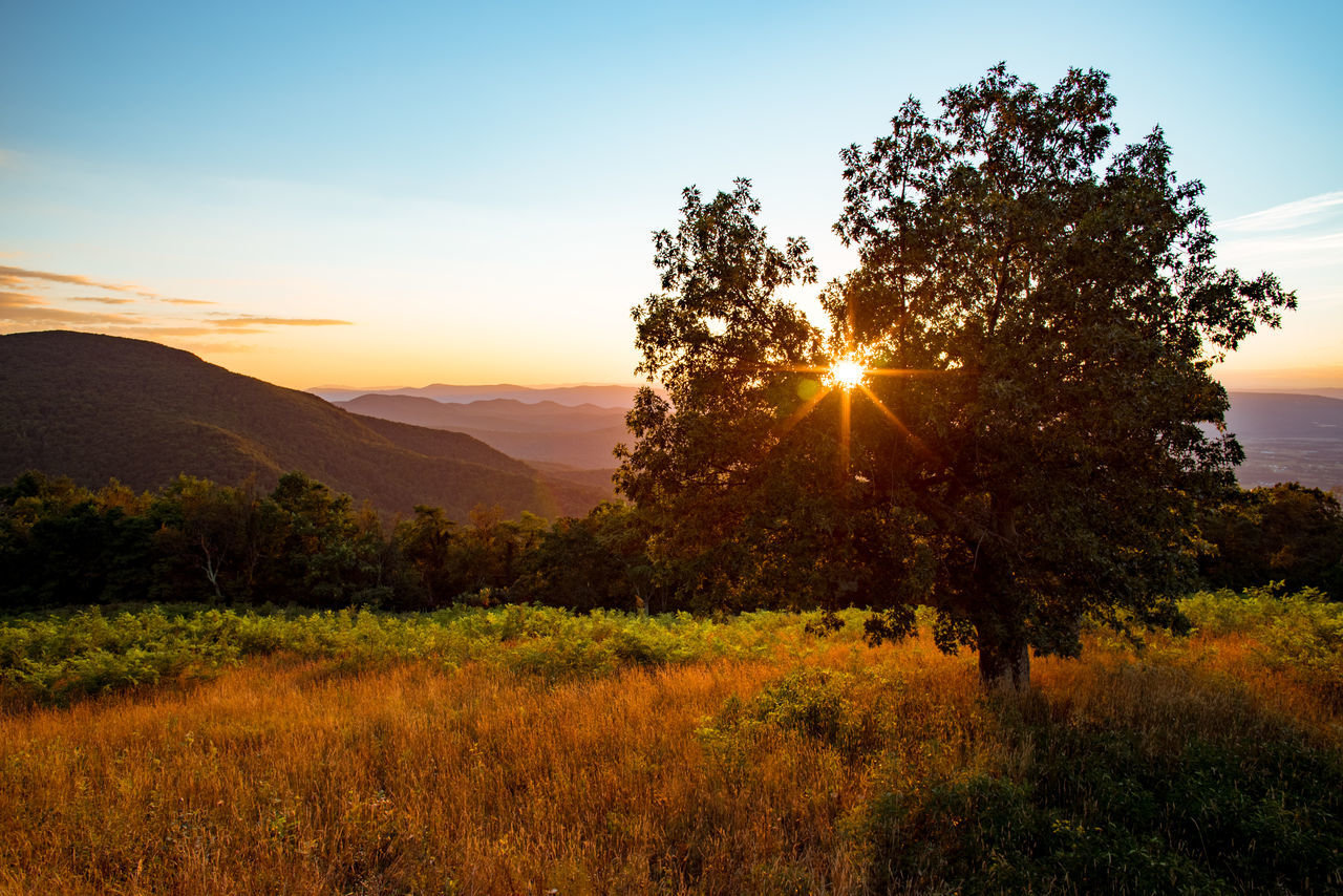 Beauty In Nature Blue Ridge Mountains Day Grass Growth Inspirational Landscape Mountain Nature No People Outdoors Plant Scenics Shenandoah Sky Sun Sunbeam Sunlight Sunrise Sunset Tranquil Scene Tranquility Tree