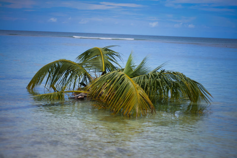 Beauty In Nature Exoticism Horizon Over Water Ocean Palm Leaf Palm Tree Pigeon Point Beach Scenics Seascape Tobago Beach Tranquil Scene Tranquility Tropical Climate Vacations Water Waterfront Ice Age Global Warming Tree In The Water