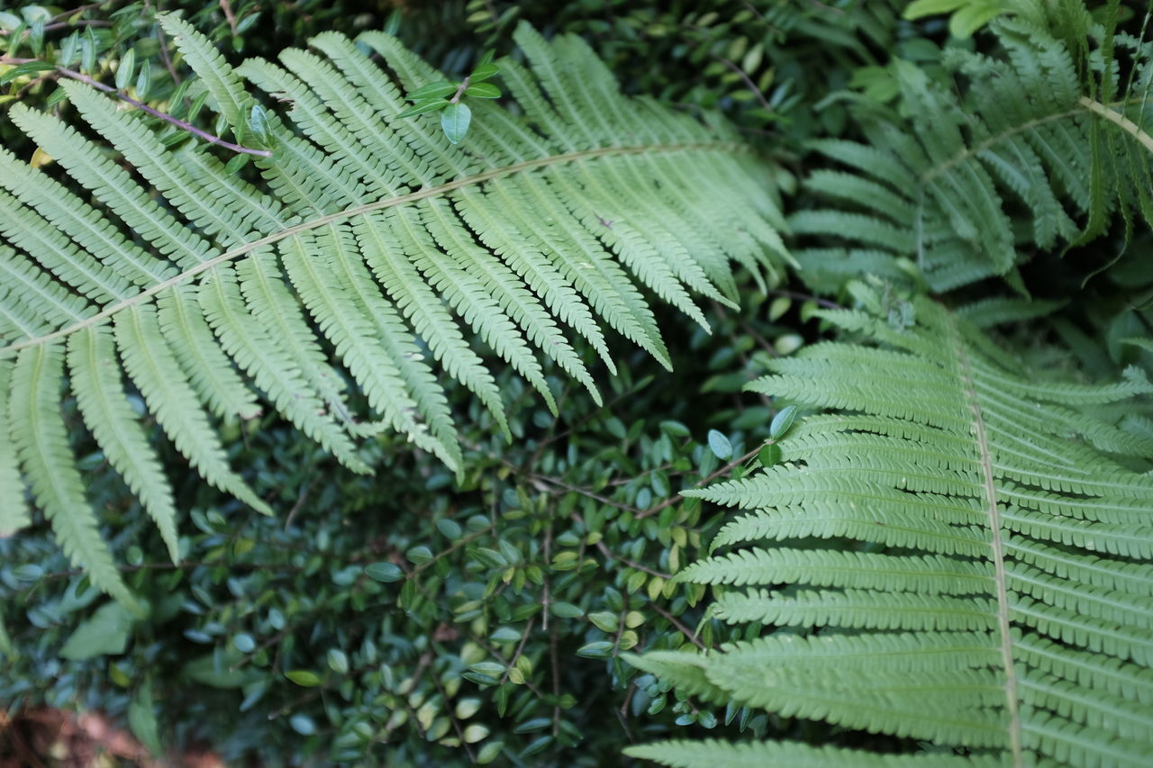 Enjoying The View Growing Growth Nature Nature On Your Doorstep Nature Photography Summertime Beauty In Nature Enjoying Life Fern Ferny Ferny Grove Flora Nature_collection Naturelovers Naturephotography Summer