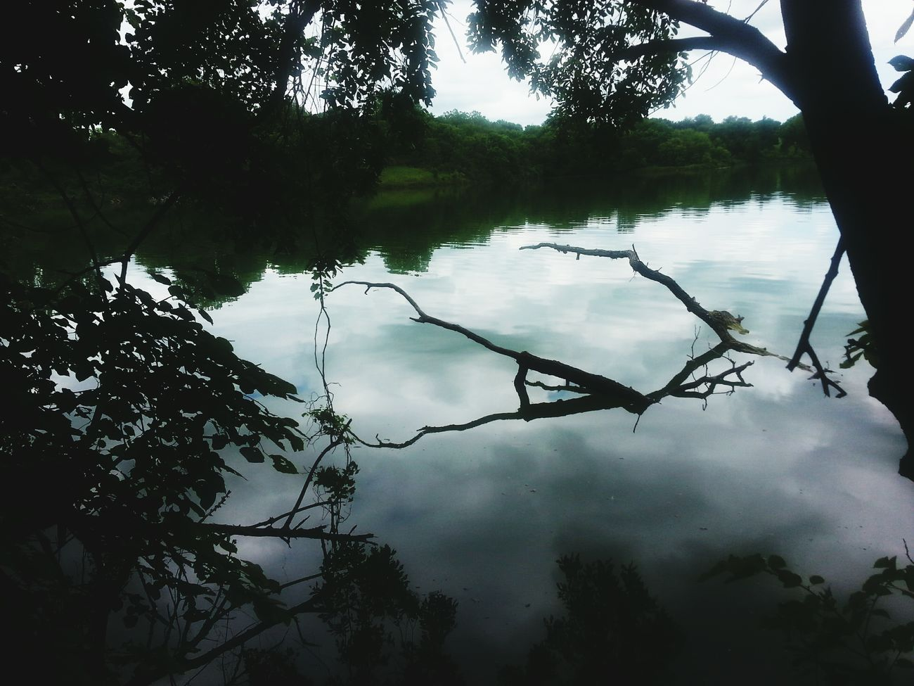 Taking Photos Reflections Deadwood  Fishing