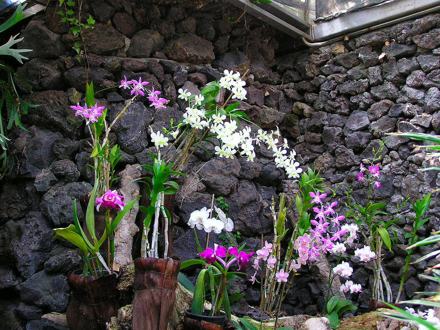 Abundance Of Flowers Beauty In Nature Bloom Blooming Day Environment Flower Flower Collection Flowers Flowers, Nature And Beauty Fragility Freshness Garden Garden Flowers Gardening Growth Indoors  Nature Nature No People Orchid Orchid Blossoms Orchid Garden Orchids Plant