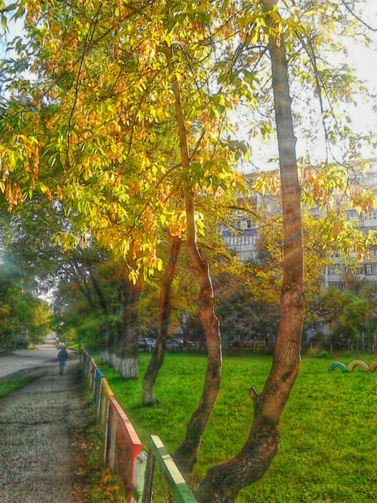 Photography Autumn Urbanscape Trees Autumn Colors Sunrise_sunsets_aroundworld