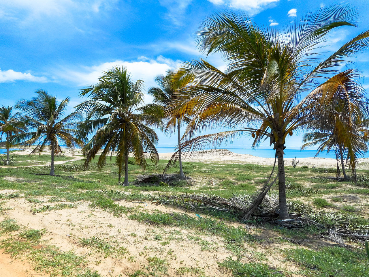 Palm trees near the ocean Beauty In Nature Blue Cloud - Sky Day Grass Growth Landscape Natal Natal - RN Nature No People Non-urban Scene Outdoors Palm Tree Palm Trees On The Beach Nature Scenics Sky Sunlight Tranquil Scene Tranquility Tree Water EyeEmNewHere