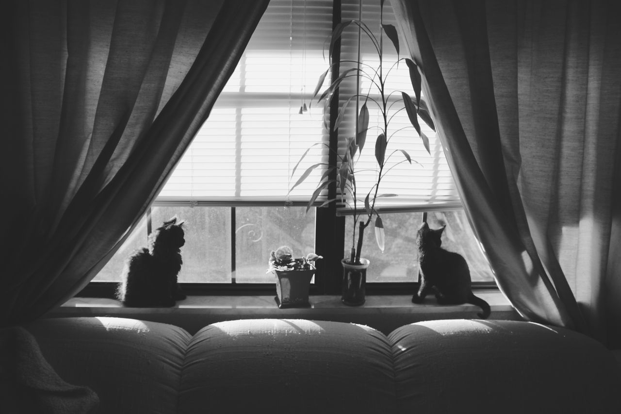 Window Home Interior Togetherness Kittens Black Cats Cats Of EyeEm Black Cats Are Beautiful Bnw_friday_eyeemchallenge Black & White Photography Black Cats Lovers Pets Black Cat Black Cat Photography Animal Themes Black And White Animals Bnw_collection Portrait Smoky