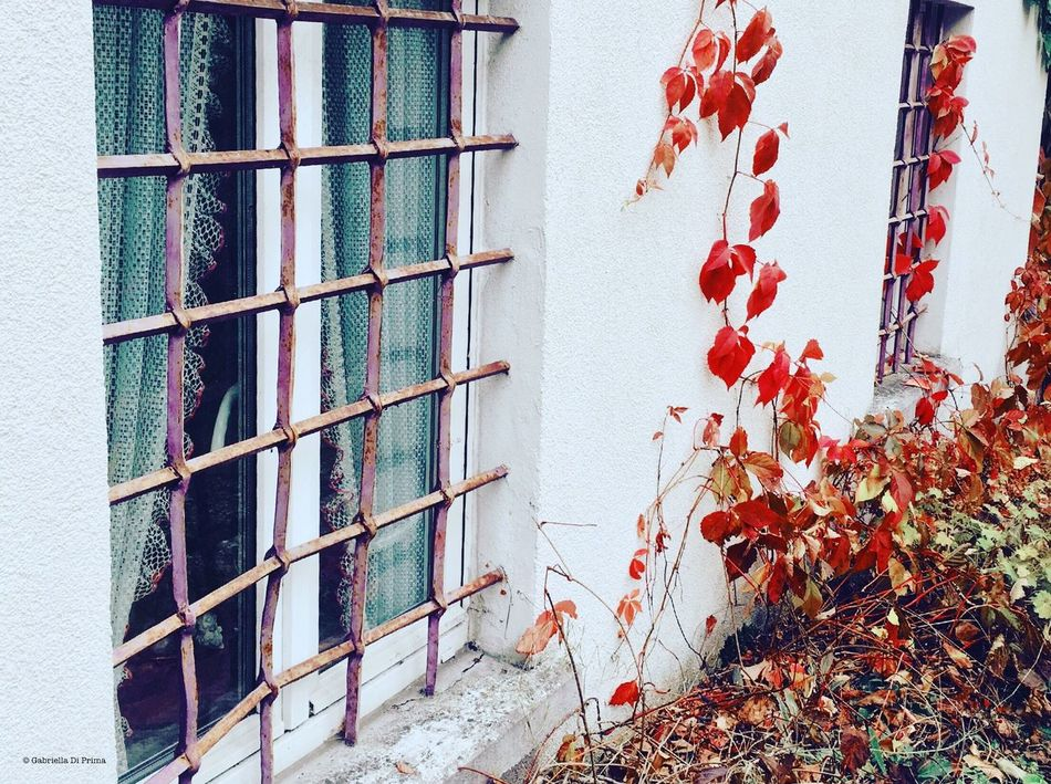 Roadtrip Autumn No People Built Structure Architecture Building Exterior Aboutgabriella Photography Traveling Colors Red Leaves Window House Wall White Outdoors Scenery