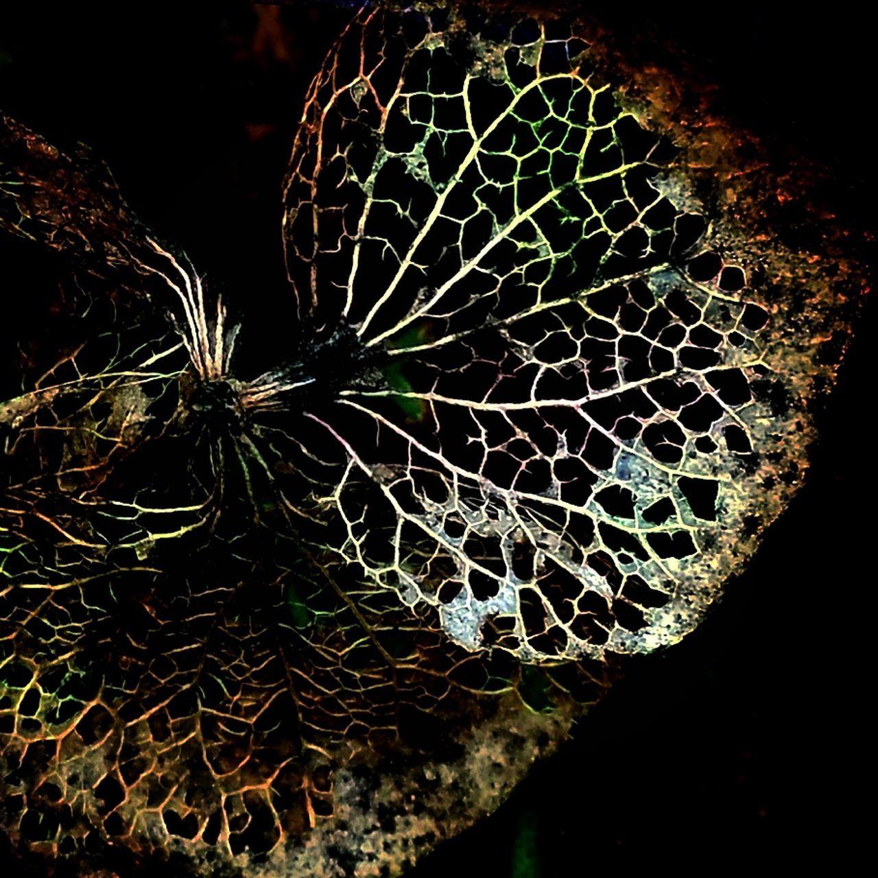 紫陽花Photo 紫陽花 あじさい 素枯れ紫陽花 加工 あじさい 紫陽花-hydrangea-