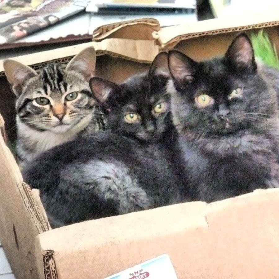 Cat Kitty Kedi Catsinabox animallover pet