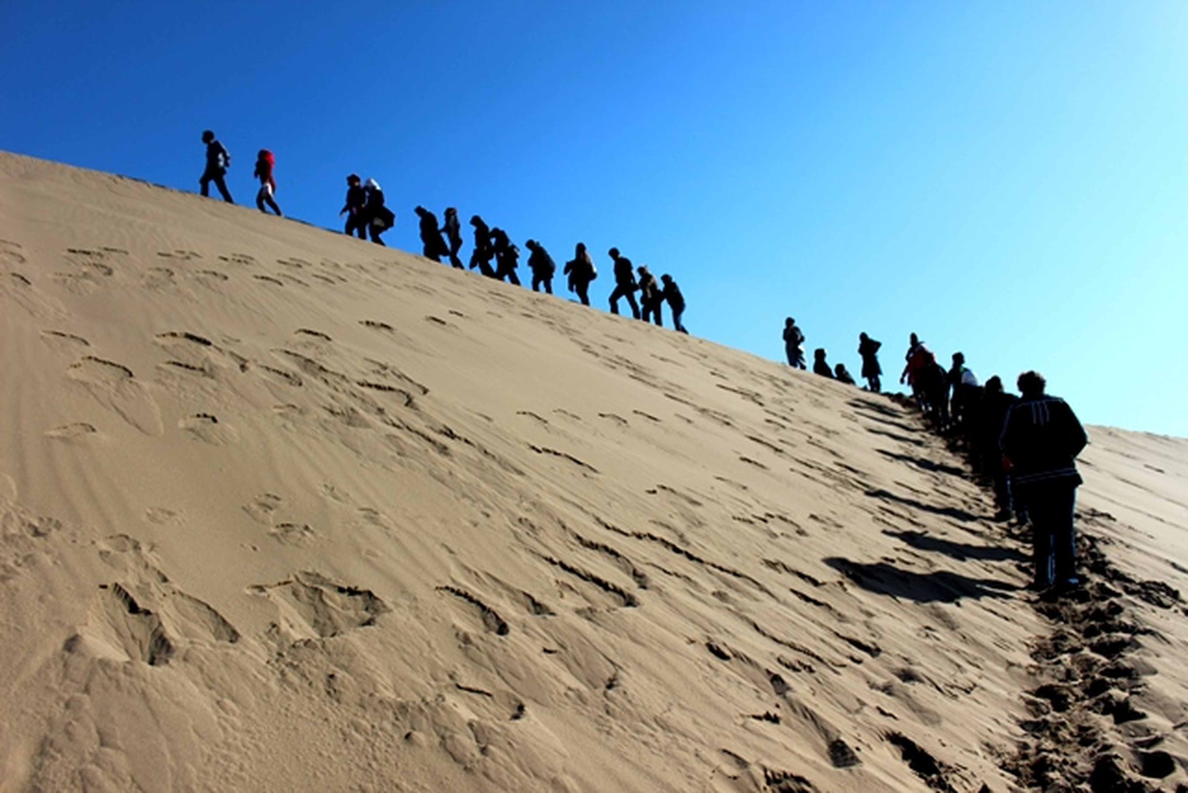 clear sky, large group of people, sand, men, copy space, bird, sunlight, blue, animal themes, beach, desert, lifestyles, person, leisure activity, low angle view, day, flock of birds, togetherness