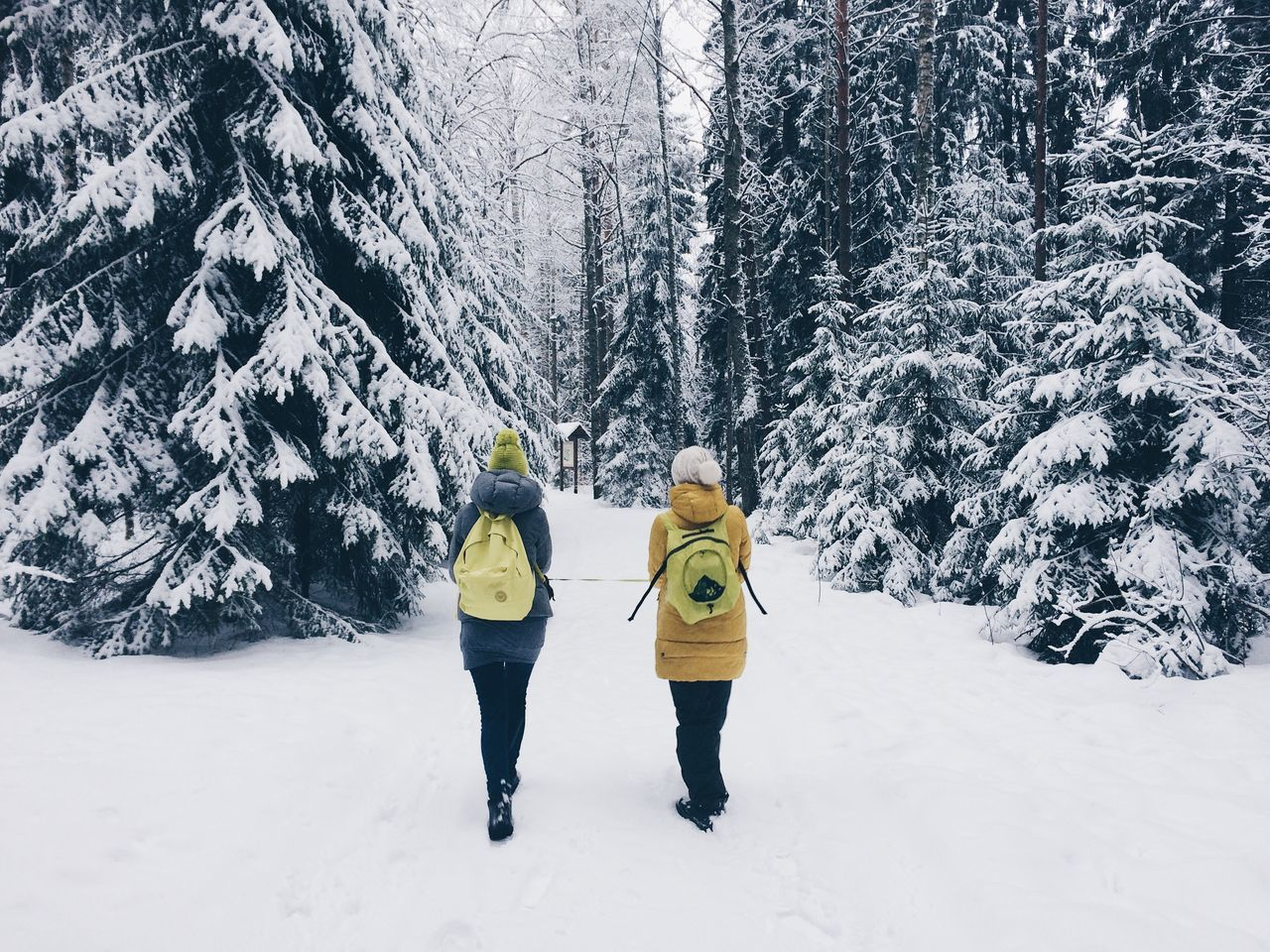 Adult Adults Only Beauty In Nature Cold Temperature Friendship Full Length Fun Headwear Leisure Activity Lifestyles Mature Adult Nature Outdoors People Recreational Pursuit Snow Sport Sports Clothing Togetherness Tree Two People Walking Winter Yellow Young Adult