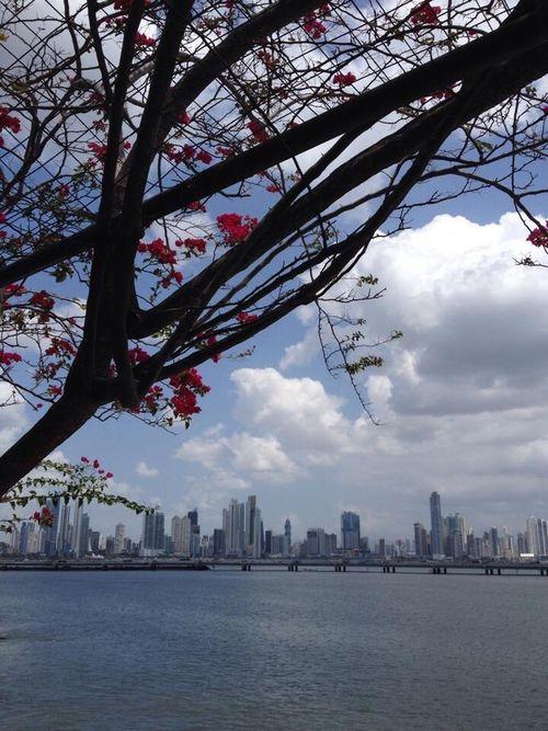 Panamá Panama City PanamaCity Panama City Panama Skyscraper Skyline Ocean Atlantic Ocean Tropical Tropical Climate Tropical Dream Trees Flowers