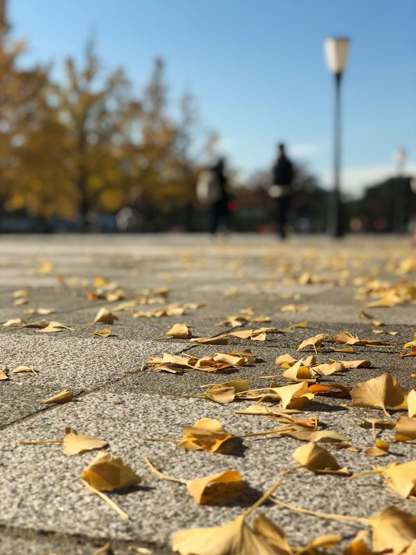 Autumn leaves/枯葉 Autumn Leaf Change Dry Outdoors Fallen Leaves Nature Selective Focus Day Street No People Abundance Focus On Foreground Tree The Way Forward Beauty In Nature Close-up Tranquility Scenics IPhoneography IPhoneX