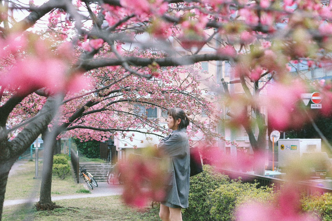 Film style sakura photos <3 Adult Adults Only Branch Cherry Blossom Cherry Tree Film Film Photography Full Length Lights Nature One Person Outdoors People Springtime Tree Young Adult Young Women