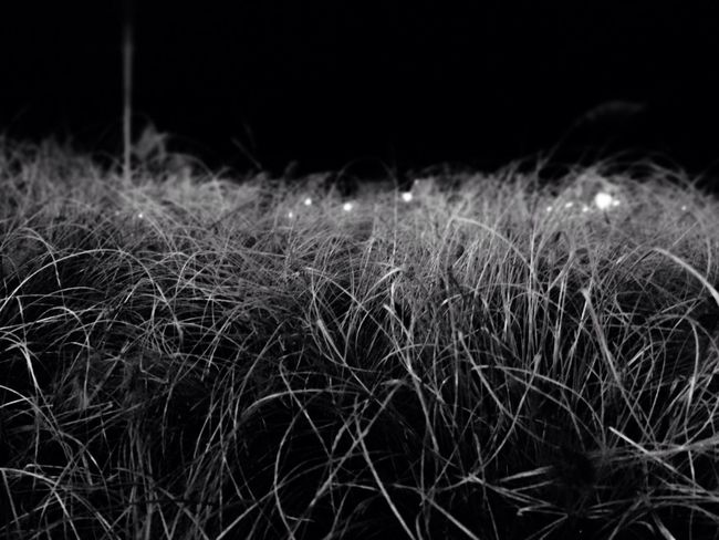 Light And Shadow Dark Black And White Nature Abstract