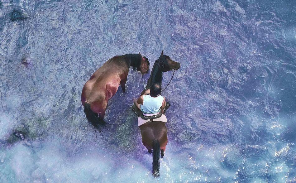 Beautiful stock photos of cowboy, Animal Themes, Cowboy, Day, Domestic Animals