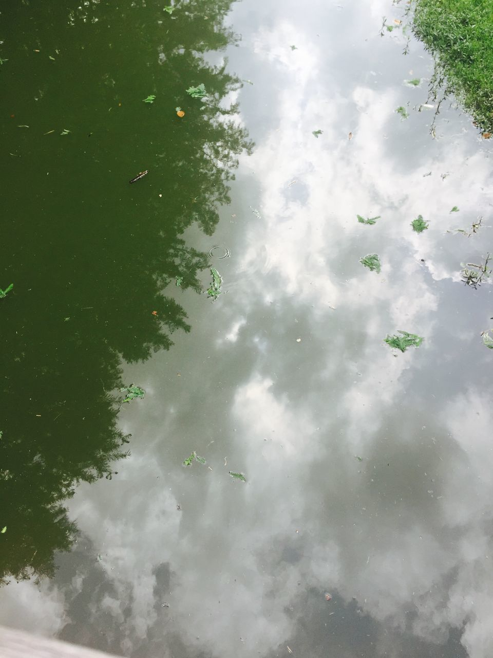Sky Reflected In Pond