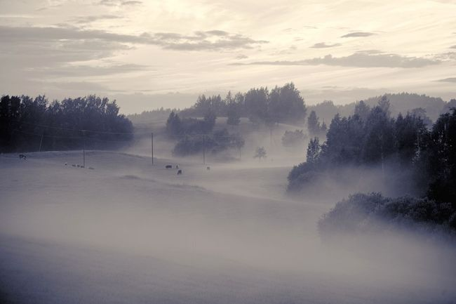 Misty nights. Nature Photography Nature Landscape Monochromatic Summer Nikon Travel, Holidays