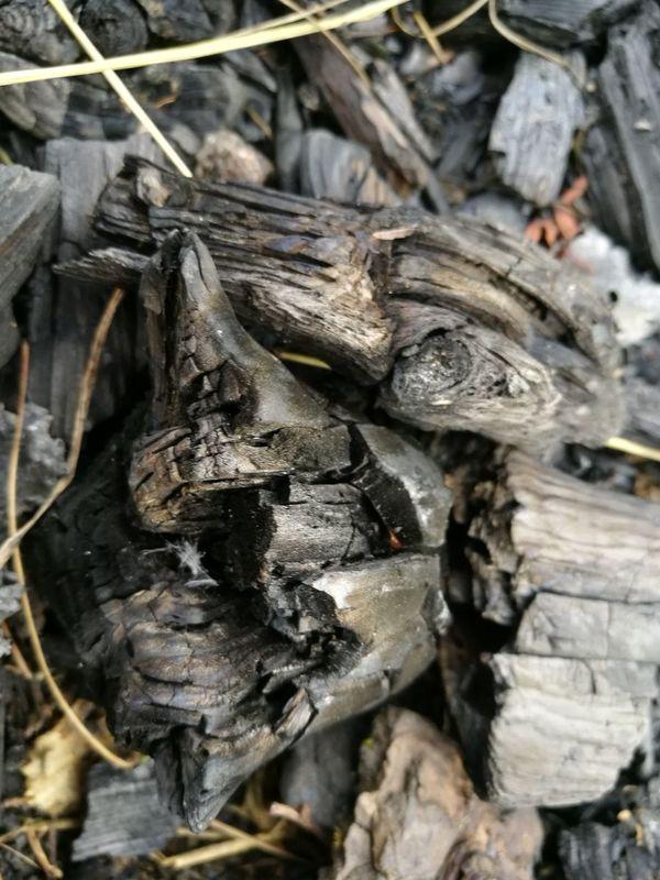 Wood Charred Wood Bonfire Wood