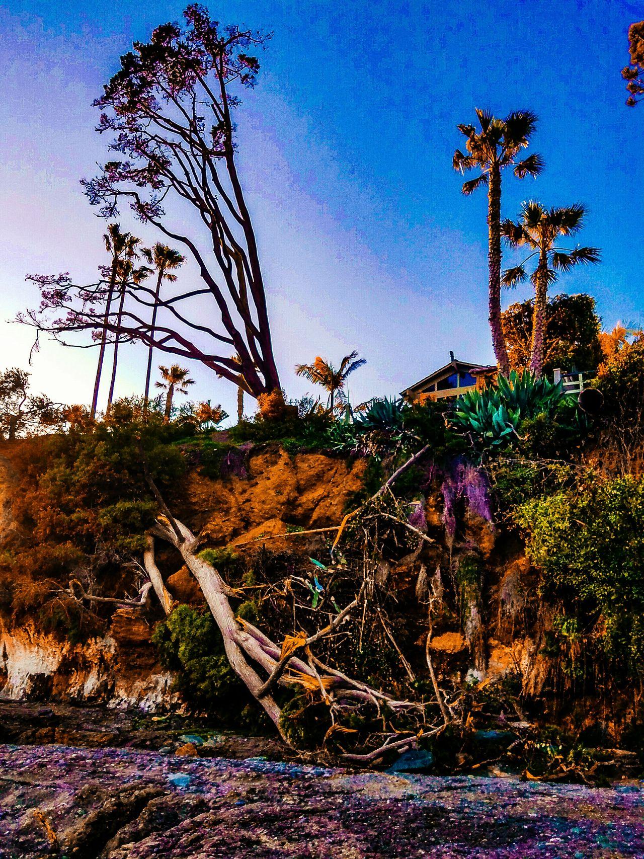 Shaws Cove Laguna Beach, CA Tree Outdoors Nature No People