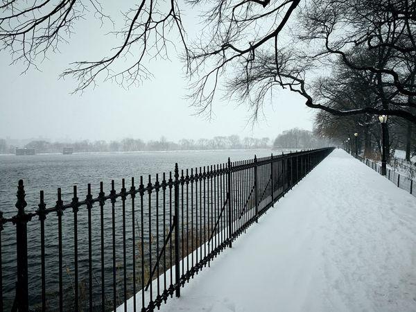 Rahim RahimNoel New York Manhattan Beautiful Snow ❄ Beauty In Nature Vivid First Eyeem Photo Abstrax Calm No People Random Tree City Blizzard