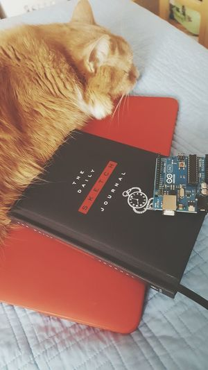 The cat of an inventor is a friend of a lifetime Arduino Adafruit