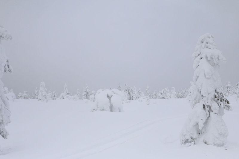Arctic Circle Cold Temperature Day Finland Frozen Landscape Lapland Lapland, Finland Nature No People Outdoors Snow Snowing White Color Winter