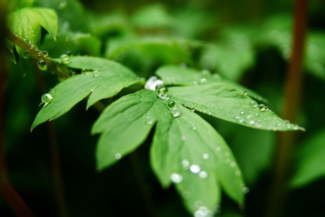 Making the most of a rainy week. Rain drop beads on new leaves. Water Droplets Waterdrops Beads Of Water Newleaves RainyDays Nature Photography Naturelovers Green Green Leaves Water Drops